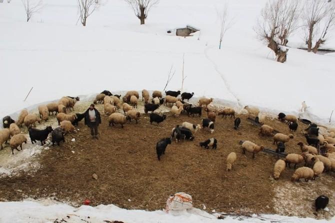 Sarıyayla Köylülerinin Karla Mücadelesi Devam Ediyor