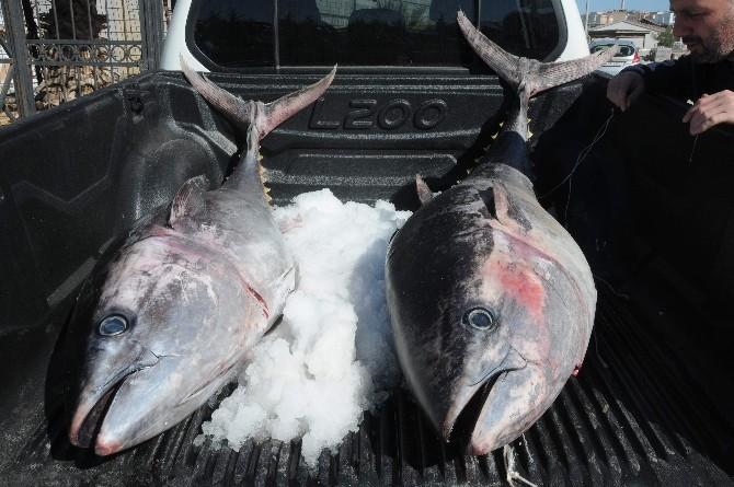 Kaçak Avlanan Balıklara El Konuldu