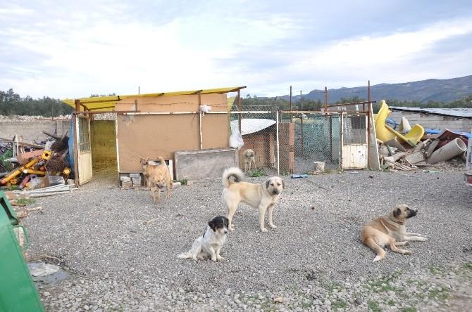 Belediye Hayvan Barınağı Ölü Köpeklerle Dolu