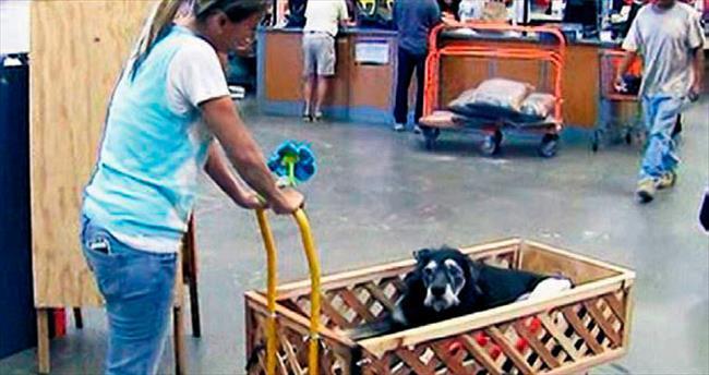 Kanser hastası köpeğe özel araba tasarladı