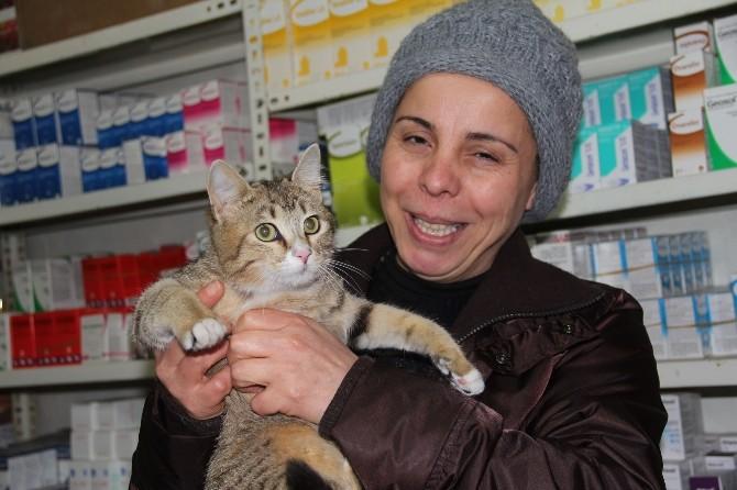 Kedilerin En Özel Ayı Martta Kediler İçin Önlem Alınmalı