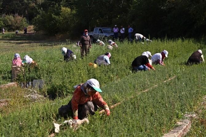 Eskişehir Orman Bölge Müdürlüğü'ne 3 Bin 500 Geçici İşçi Alınacak
