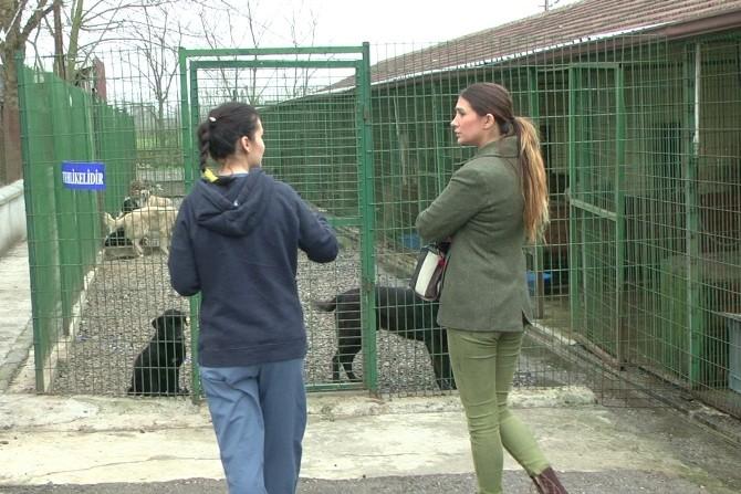 Nilay Dorsa, Düzce'de Hayvan Barınağını Ziyaret Etti