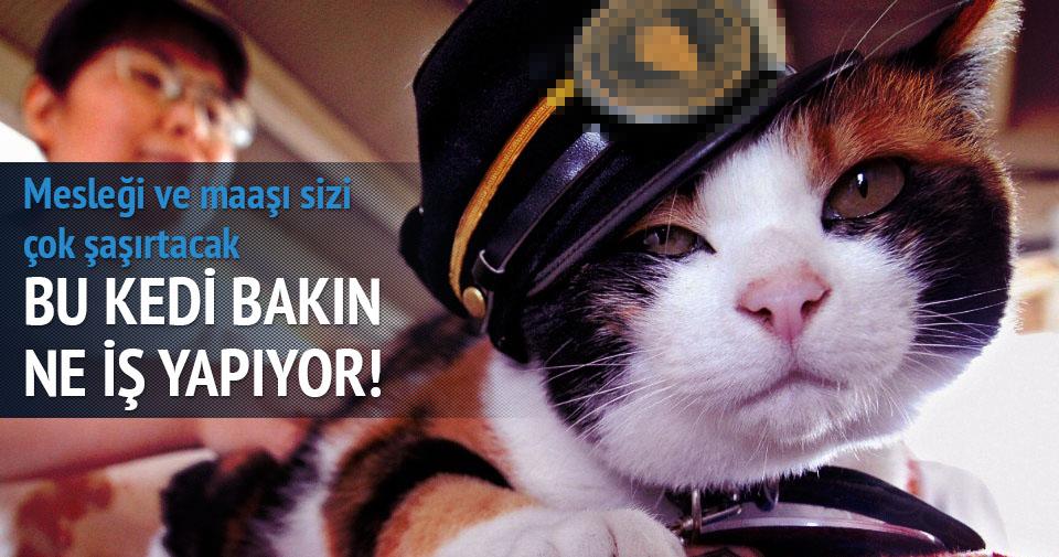 Bu kedi tren istasyonunda şef!