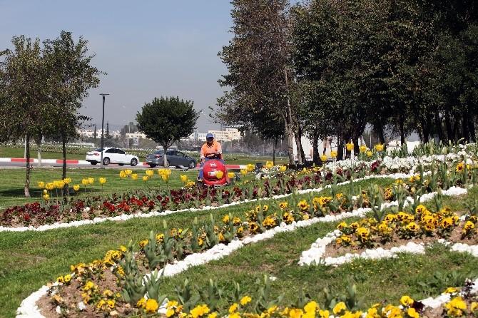 Baharın Müjdecisi Laleler Antalya'yı Süslüyor