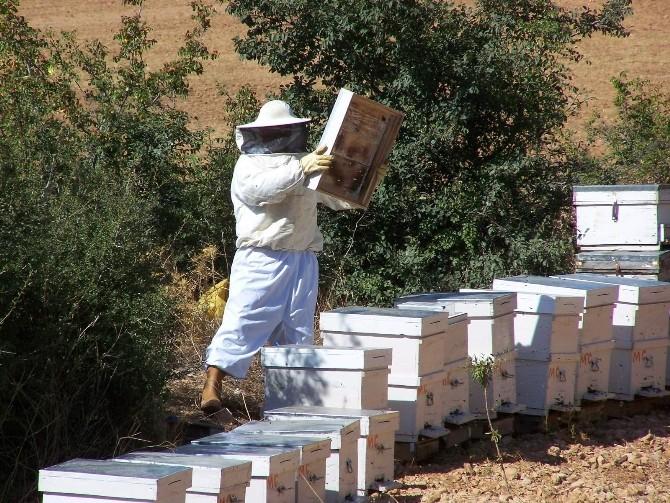Aydın'da Arı Konaklama Alanları Belirleniyor
