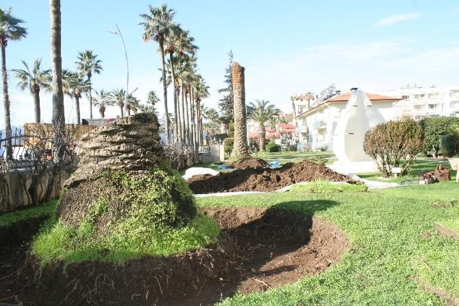 Marmaris'te Kırmızı Palmiye Böceği İstilası