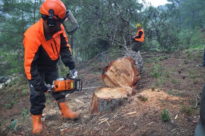 Ağaç Kesme Ve Boylama Operatörlüğü Eğitimi Tamamlandı