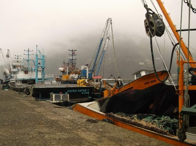 Balıkçılar Giden Hamsinin Ardından Gelen Mezgit İle Güldü