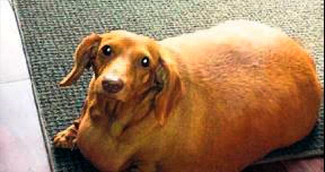 Özel diyetle 20 kilo zayıfladı