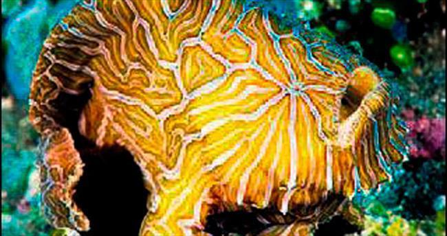 Okyanuslarda, 1500 yeni canlı keşfedildi