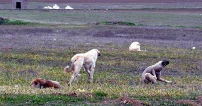 Eskişehir'de köpekler genç kadını parçaladı