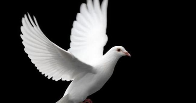 Barış Akademisi kuruluyor
