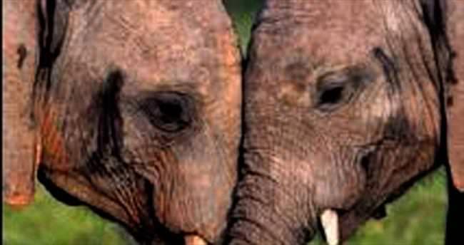 Fillerin aşkı başka olur, el ele göz göze