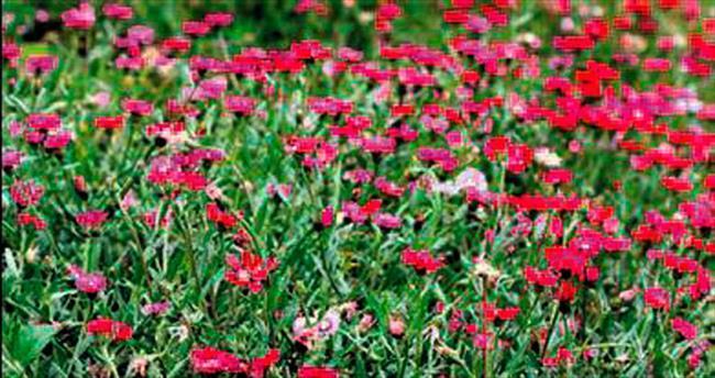'Endemik bitkiler için uzmanlar alınmalı'