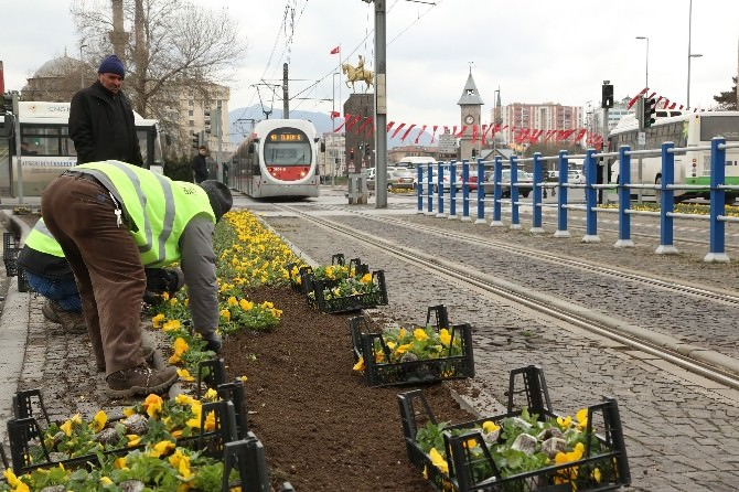 Büyükşehir Baharı, Çiçeklerle Karşılıyor