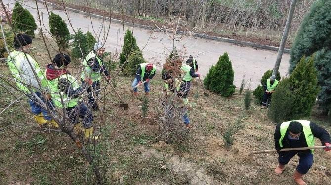 Diovası'nda Ağaçlandırma Çalışmaları Başladı