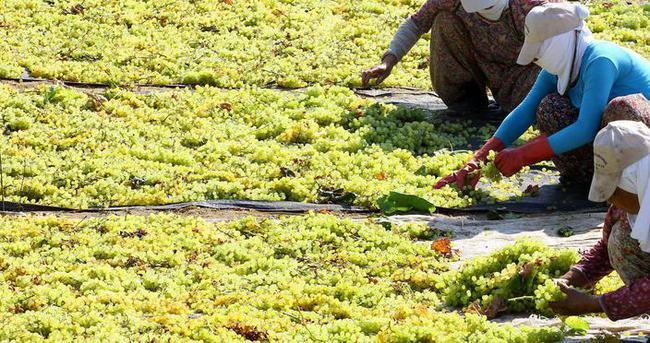 Tarım ürünleri yatırım aracı oluyor