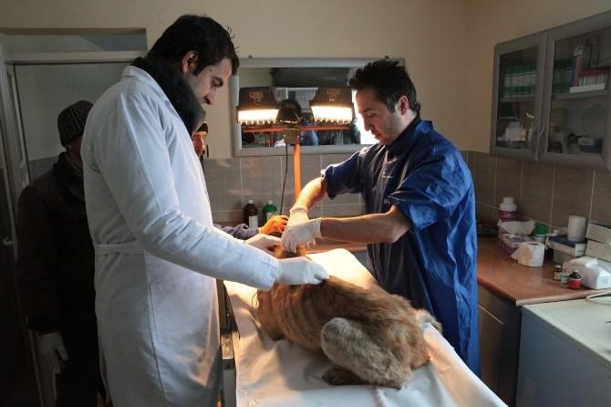 O Hayvanlara Bolu Belediyesi Sahip Çıktı
