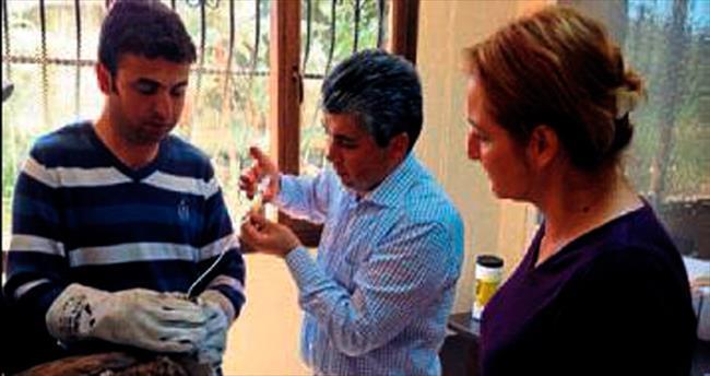 İsrail'den gelen akbaba Adana'da tedavi altında