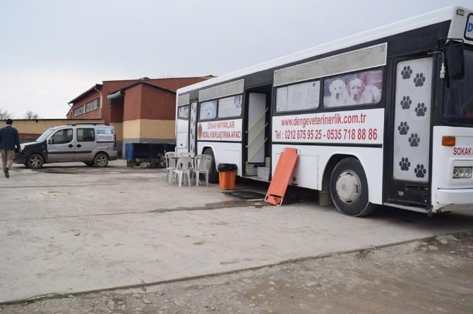 Şuhut'ta Sokak Hayvanları Rehabilite Edilmeye Başlandı