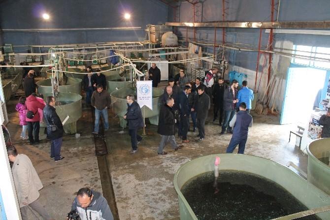 Erzurum Gazeteciler Cemiyeti'nden Balık-ekmek Şöleni