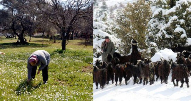 Türkiye iki ayrı mevsimi bir arada yaşıyor!