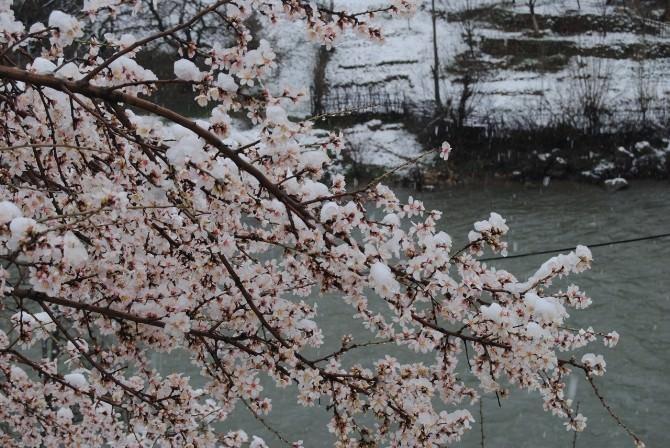 Tunceli'de Kar Yağışı Köy Yollarını Ulaşıma Kapadı