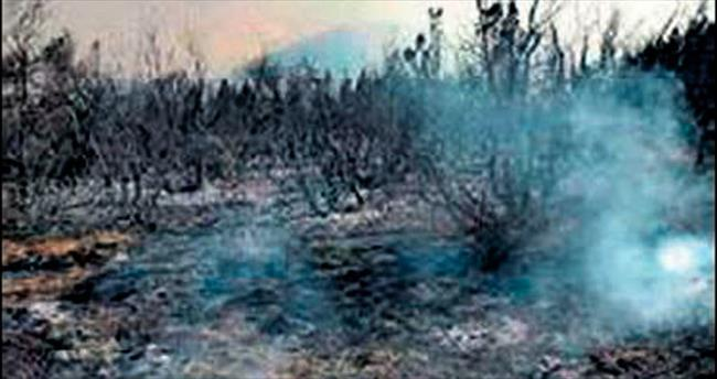 Pek çok bitki türü yangında kül oldu