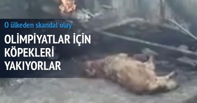 Azerbaycan Olimpiyat için köpekleri yakıyor!