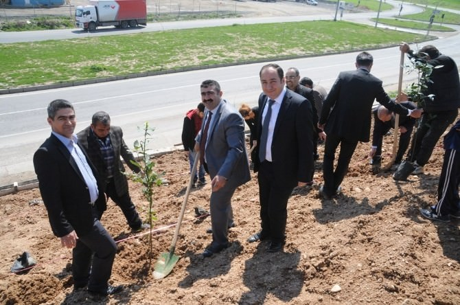 Cizre'de Bin 200 Fidan Toprakla Buluştu