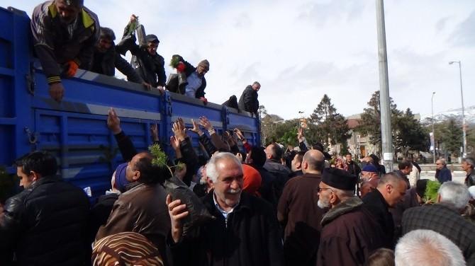 Erzincan'da Çam İzdihamı