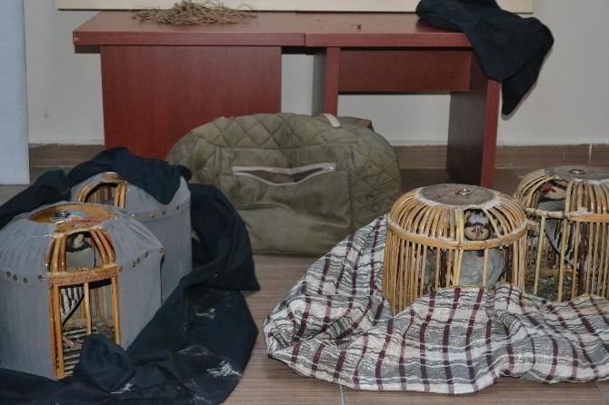 Iğdır'da Kaçak Keklik Avcılarına Ceza