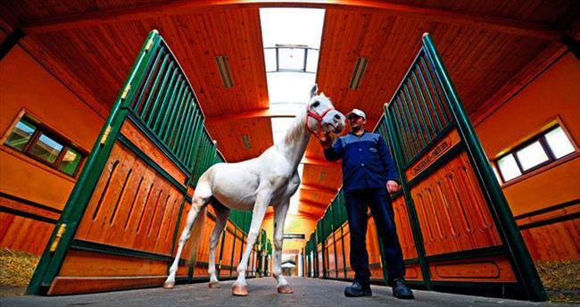 TİGEM 'konkur atı' üretecek