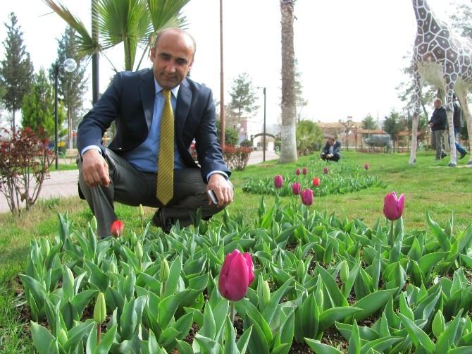 Araban Belediye Başkanı Mehmet Özdemir'in Lale Sevgisi