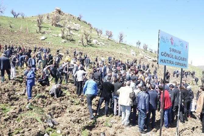 Şırnak'ta 96 Bin Metrekarelik Hatıra Ormanına 9 Bin Fidan Dikildi