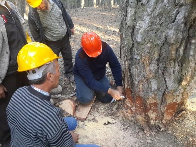 Orman İşçisine Eğitim