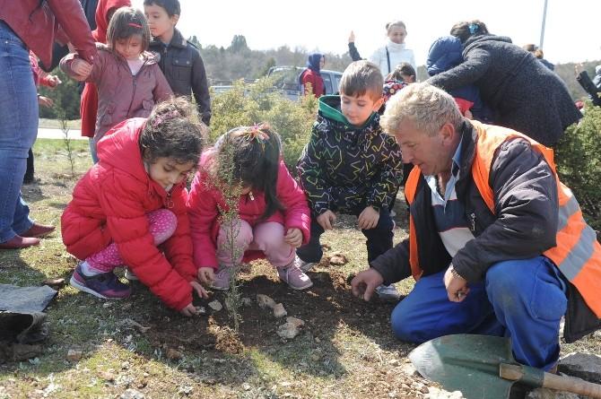 Bozüyük'te Öğrenciler Kent Ormanı'na 555 Adet Selvi Fidanı Dikti