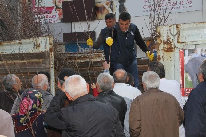 Gaziemir Belediyesi 3 Bin Fidan Dağıttı