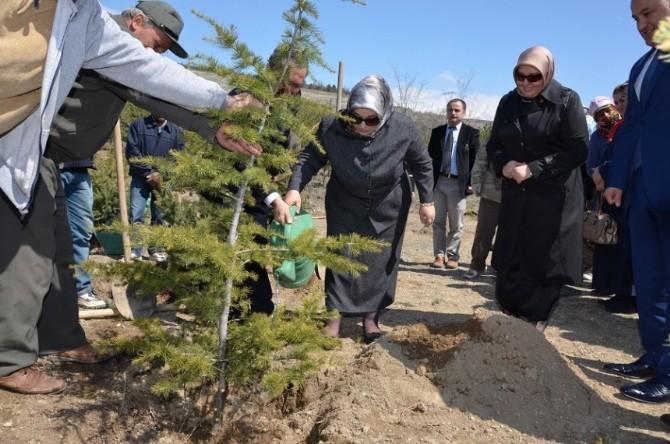 """Gönül Elçileri Erzincan'da """"Bereket Ormanı"""" Oluşturdu"""