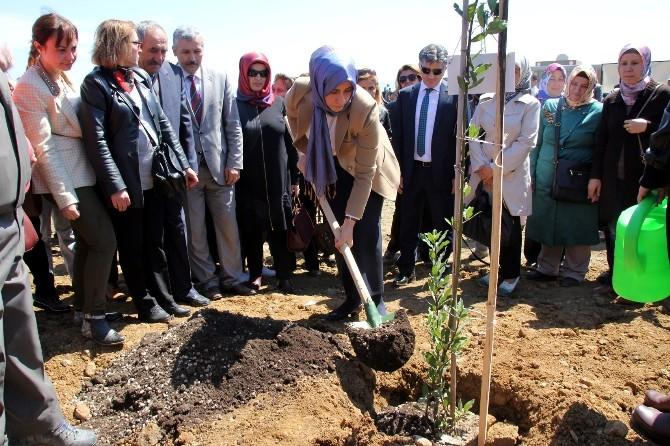 Hatay'da Bereket Ormanına 10 Bin Fidan