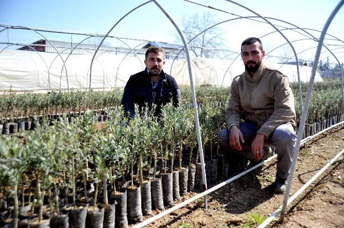 200 Milyon Zeytin Ağacı Hedefinin Yüzde 80'ini Orhangazi Karşıladı