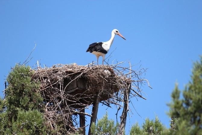 Leyleklerin Yaşam Alanlarına Kuş Gözetleme Kuleleri İnşa Edilecek
