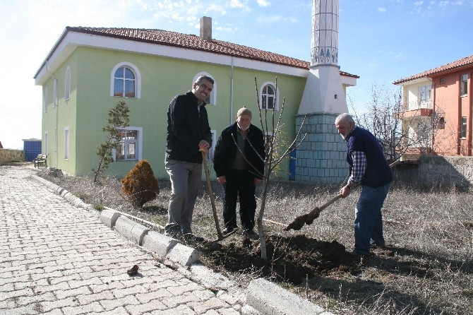 Yozgat İmamoğlu Cami Cemaati Cami Bahçesini Ağaçlandırdı