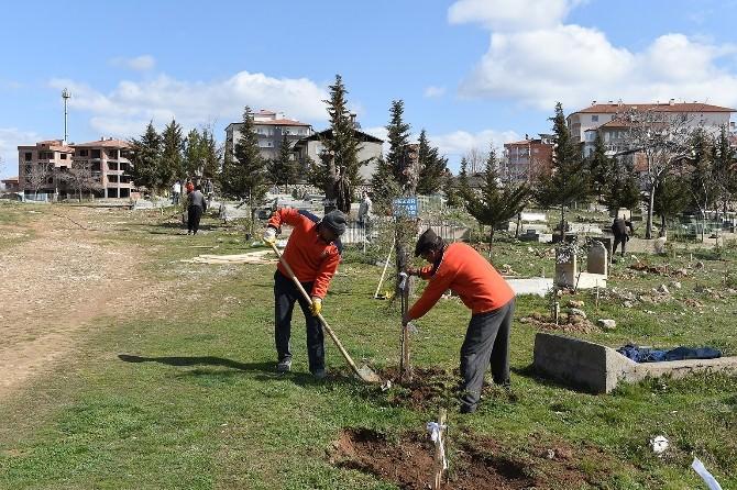 Belediye, İş Kur İşbirliğiyle Mezarlıkları Yeşillendiriyor