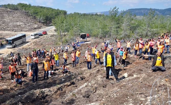 Gönüllüler, Ormancılar El Ele Fidan Dikti
