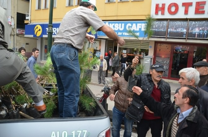 Fatsa'da 2 Bin 500 Fidan Dağıtıldı