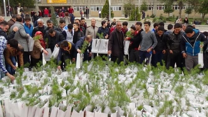 Kırıkkale'de 2 Bin Fidan Dağıtıldı