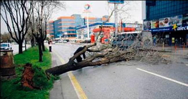 Yağışlar Mamak'ta ağacı yere serdi