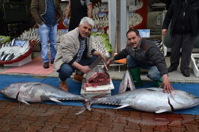 Mersin'de Yakalanan Orkinos Kayserilileri Şaşırttı